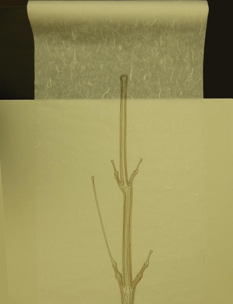 Brou de noix sur papier hanji